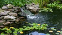 Fotolia_1111677_XS[1]watergarden